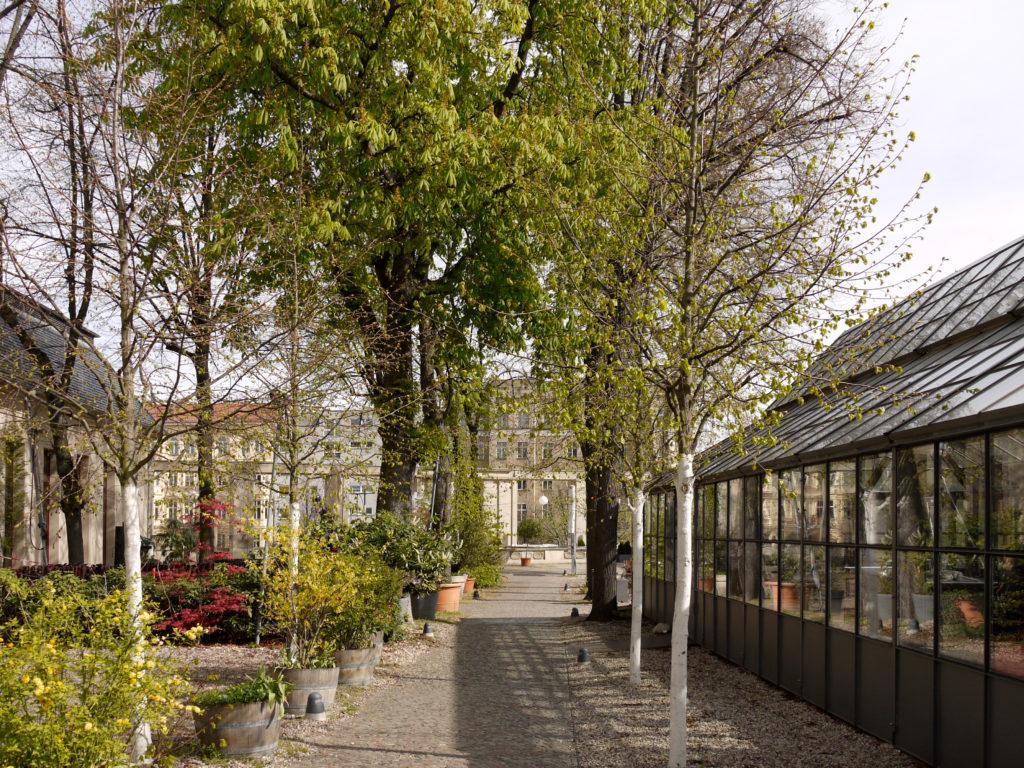 Bäume auf der Terrasse am Pfefferberg